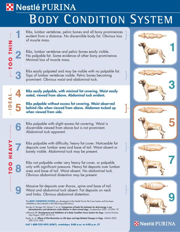 A chart showing pictures of dogs ranging from fat to thin from the top and side.