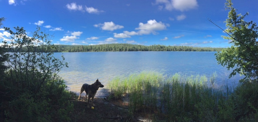 silhouette of a German shepherd dog at the edge of a blue lake surrounded by a pine forest.