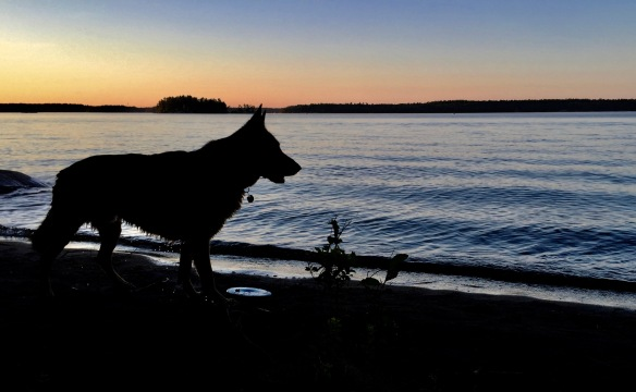 Killbear dog beach 2