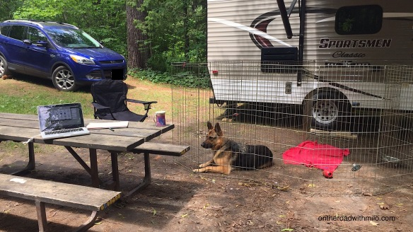 campsite with picnic table, blue suv, camper trailer and German shepherd dog in a pen