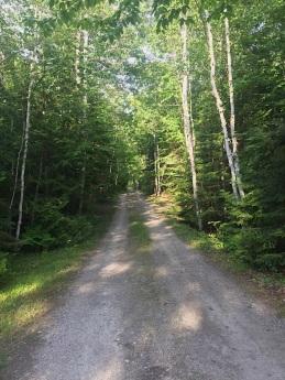 a dirt path through a forest