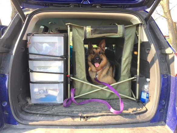 Black and tan German Shepherd Dog in a green canvas crate in the back of a dirty SUV.
