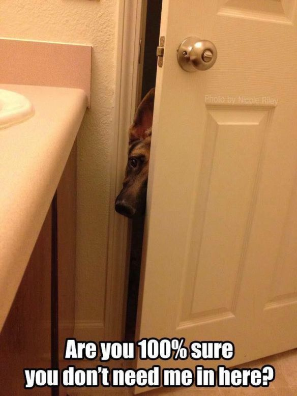 dog in bathroom