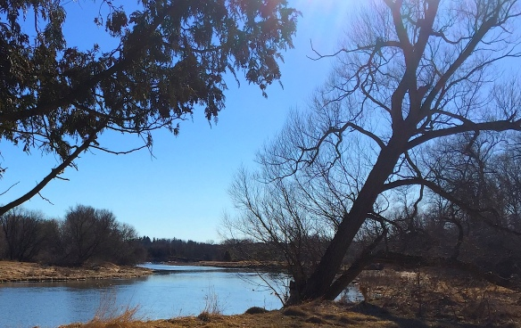 leafless tree leaning away from blue river and across blue sky