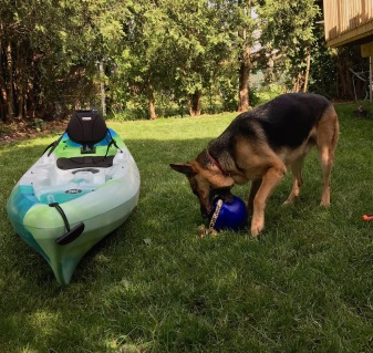 boat becomes less interesting than the toy
