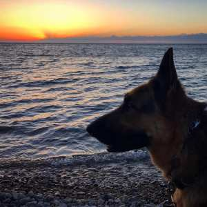 silhouette of German shepherd head against a blue lake with a red orange and blue sky